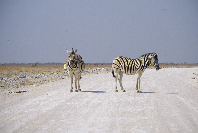 Namibia. mazzaliarmadi.it wildlife
