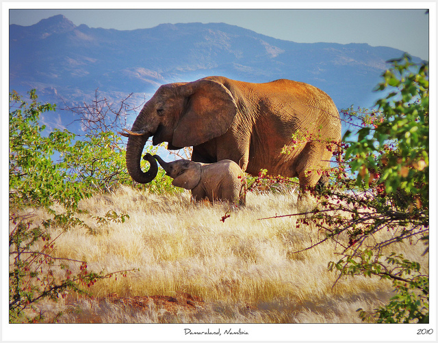Mother & Calf,                        Damaraland Namibia
