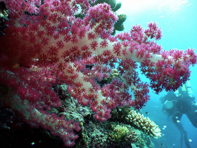 NOAA Ocean Explorer: Pacific Deep Reefs 2011 Exploration: Mission Summary